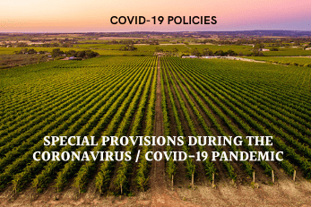 Our Covid-19 Policies